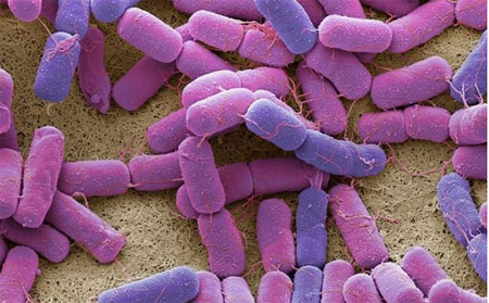 intestinal bacteria affects mind function